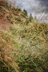 Untitled (/KENTAMA) Tags: ef35mmf2 eos6d weed     autumn
