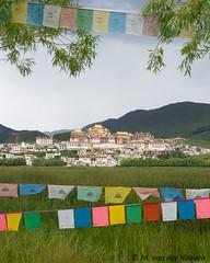 Shangri la (Monique vd Hoeven) Tags: china yunan shangrila monastery prayerflags zhongdian tsongtammonastery buddhism grass grasslands mountains