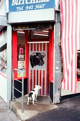 Patience (glenn weaver) Tags: dog film leica m6 butcher shop bristol carmen lab