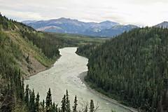McKinley Explorer views (karma (Karen)) Tags: mckinleyexplorer alaska denalinp mountains rivers trees spruce trains domedtrain topf25 cmwd