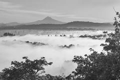 foggy morning in Southeast Portland (Ben McLeod) Tags: mthood portland blackwhite fog morning