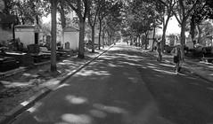 Searching (Ed Tottenham) Tags: tomb tombstone cimetiredumontparnasse boulevardedgarquinet 75014 paris france cimetire cemetery montparnassecemetery montparnasse grave restingplace