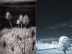 Near & Far (PhotoAtelier) Tags: diptych infrared landscape