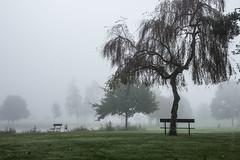 take a seat ;-) (Florian Grundstein) Tags: tree lake mist misty fog nature morning teublitz upperpalatinate oberpfalz bayern heimat nebel
