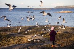 The birds (DavidAndersson) Tags: alva birds feeding sweden many plenty fglar vnersborg tamron18200f3563 skrckleparken