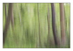 Deep inside the forest (wautierp) Tags: forest nikon atmosphere impressionism fort ambiance impressionisme acdsee