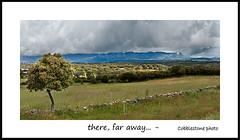 there, far away... (manolo guijarro) Tags: madrid tree landscape arbol paisaje cobblestone scape picodelamiel lacabrera nikond700 manologuijarro