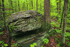 Inured (Nicholas_T) Tags: trees nature forest spring rocks hiking pennsylvania boulder creativecommons poconos deciduous pikecounty understory delawarestateforest glacialerratic temperatedeciduousforest thunderswamptrail