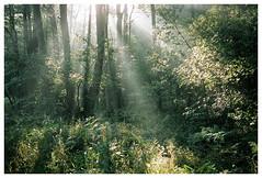 *** (Spartaxus) Tags: light nature analog forest katowice portra silesia ligota