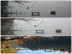 Evoluzione (Diantopics) Tags: flowers trees italy lake flower grass landscape torino lago landscapes italian italia piemonte turin paesaggi piedmont paesaggio piemont italianlandscape