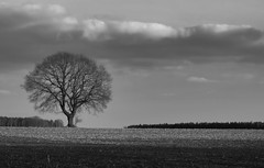 Just a Tree ... (Andreas Jaeck) Tags: card tree baum feld wolken field clouds black white monochrome bw natur nature