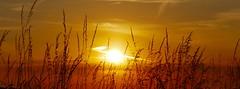 the flash (korinthography ~sometimes off~) Tags: sunset red nature lens lumix evening sundown panasonic flare stunningnature tz101 korinthograpy