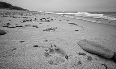 Paws on the beach (mswan777) Tags: dog paw beach lake michigan waves water stones nikon d5100 sigma 1020mm nature scenic dunes