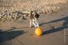 Calia (Lucien Schilling) Tags: cadzandbad beach cadzand zeeland netherlands nl dog dogs playing