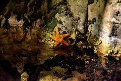 Starfish (maiklopes) Tags: argentina temaikèn temaiken buenosaires escobar zoo nature natureza naturaleza animals animal starfish estrela estrella mar