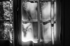 light and curtain (S amo) Tags: fenêtre window light lumière sun soleil ombre shadow curtain rideau netcurtain voilage nb bw noiretblanc blackandwhite intérieur indoor