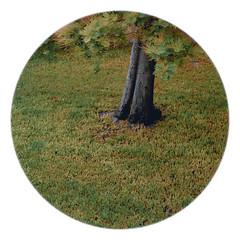 229 // 366 - Untitled (Job Abril) Tags: paisaje landscape tree grass green artisticphotography conceptualphotography 365 nikon