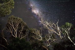 I love living on our planet...Explored...Thank you. (Celebrating over 2 million views. Thank you) Tags: milkyway stars australia lorne longexposure thegreatoceanroad night dark heavenly planet world lucky universe wonder