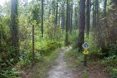 Blackwater River State Forest, Florida (fisherbray) Tags: fisherbray usa unitedstates florida okaloosacounty santarosacounty holt stateforest blackwaterriver river wasser water nikon d5000 bearlake trail hiking