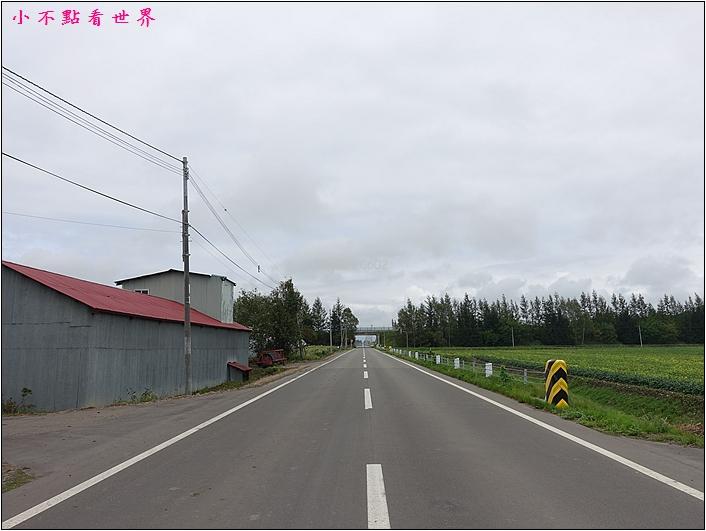 川野農場 DIY採玉米 (3).JPG