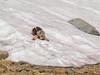 Nickie in Snow (pegeshea) Tags: backpack johnmuir nickie snow wilderness