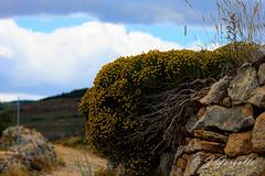 Entre Ontinas y Paredes (J.Gargallo) Tags: mosqueruela teruel aragn espaa spain nature naturaleza canon canon450d eos450d eos 450d tokina tokina100mmf28atxprod ontinas pared piedra piedraenseco