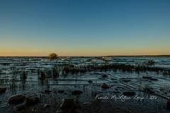20160828-IMG_7739-WM (Pamela McLellan Zmija) Tags: pamelamclellanzmija saugeenshores portelgin sunset beach lakehuron goblesgrove sunshine