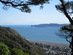 Looking over Eastbourne (Kevin Fenaughty) Tags: outdoor walking tree beech strait cook sea urban beach boat hill mountain eastbourne lowerhutt newzealand