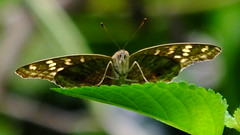 Nice Natural 7366 (johnjnjj) Tags: 2016 amazing award camera canon natural marco lady place plant share beautiful great capture asia insect focus top hit pretty youth light hot prefect hongkong people pov group cool nick nice dof good world