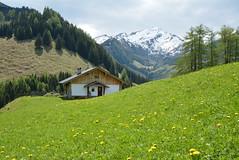 DSC_3831 (d90-fan) Tags: rauris raurisertal natur alpen salzburgerland österreich nationalpark npht hohe tauern wandern krumltal seidlwinkeltal