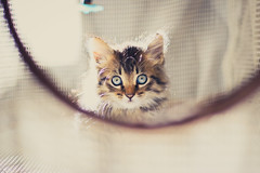 IMG_2230 (N'Grid) Tags: chaton katze kitty kitten cat chips pet animal baby babycat canoneos7dmarkii 50mmf18stm