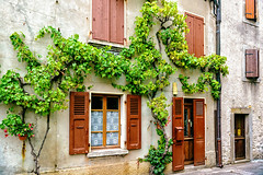 20160730-DSC_7911 (Mivr) Tags: france yvoire yard court glory plant wall decoration traditional cosy medieval
