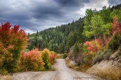 Swan valley Idaho area (Pattys-photos) Tags: swan valley idaho fall autumn cloudy