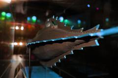 Nautilus (Franois Tomasi) Tags: sousmarin submarine eau aqua nikon google flickr couleur couleurs color colors nautilus pov pointdevue pointofview light lumire france europe julesverne mer touraine tours franois tomasi marin clairage sea ocean