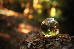 The Best Way to Predict the Future is to Create It (-Rodbod-) Tags: bokeh beechbottomdyke light crystalball glassball reflection nikond750 nikon35mmf18ged nikon35mmf18gfx outdoor outdoors hertfordshire stalbans closeup sunlight 35mm nikon forest trees autumn autumncolour fall fallcolor exploring