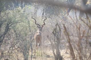 Namibia Dangerous Game Safari - Caprivi Strip 70