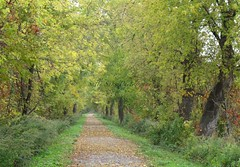 IMG_0376 (Sally Knox Sakshaug) Tags: fall autumn october nature outdoors trail walk walking wood wooded woods solitude calm secluded quiet enclosed overhung trees leaf strewn pretty
