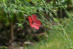 L1320150 (BS-Foto) Tags: bsfoto leica vlux1 vert verde green grn red rot rouge rosso