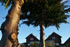 ''Tronco'' (Vctor Nez) Tags: tronco rbol arboles green verde casas calle poblacin cielo celeste sky puertomontt chile