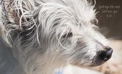 Good-bye Joe (judith511) Tags: joe dog friend mate finalphoto