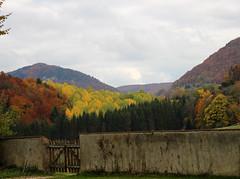 Autumn Colours (jussitoivanen) Tags: nature colors landscape tree leaves valley colours autumn natur luonto syksy vrit hill