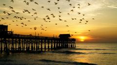 Early Birds (iShootPics) Tags: sunrise sun summer beach ngc shore warm pier scenic birds sky ocean cocoabeach water orange florida sih silhouette dawn morning