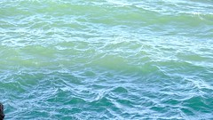 Smelts Fishs ans mackerels at Etretat (jeeget) Tags: vido xt2 fujifilm pche mouettes smeltfish maquereau mackerel lechaudron etretat normandie