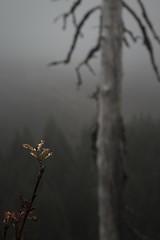Archive 2 (perfectomcferon) Tags: mt hood fall winter green pnw explore