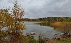 _MAL1727 (Markoliini) Tags: nikon d800e tamron 1530 luonto natur nature syksy fall hst jrvi lake sj
