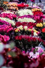 Row of flowers (John_Lundhgren) Tags: rad fotosndag fs161016 roses flowers colours fotosondag
