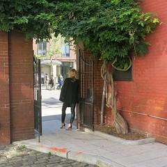 Saturday Colours - New York Style (Pushapoze) Tags: newyorkcity 5thavenue wisteria