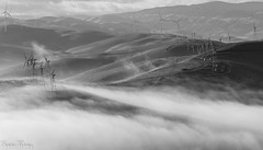 Foggy of BayArea (katiewong511) Tags: bayarea lowfog fog morning rollinghills windmills fall regionalpark eastbay park livermore recreation california sanfrancisco brushypeakregionalpreserve blackwhite