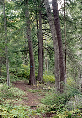 Jackson Lake Trail_ (Bill Smith1) Tags: asahipentaxkx believeinfilm billsmithsphotography fall2016 heyfsc jacksonlake lomo400c41 muskoka smcpentaxm50f14lenslens filmshooterscollective