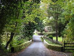 All walking is discovery (Lancashire Lass ...... :) :) :)) Tags: lane waddington forestofbowland lancashire ribblevalley crosslane trees bridge garden autumn october fence